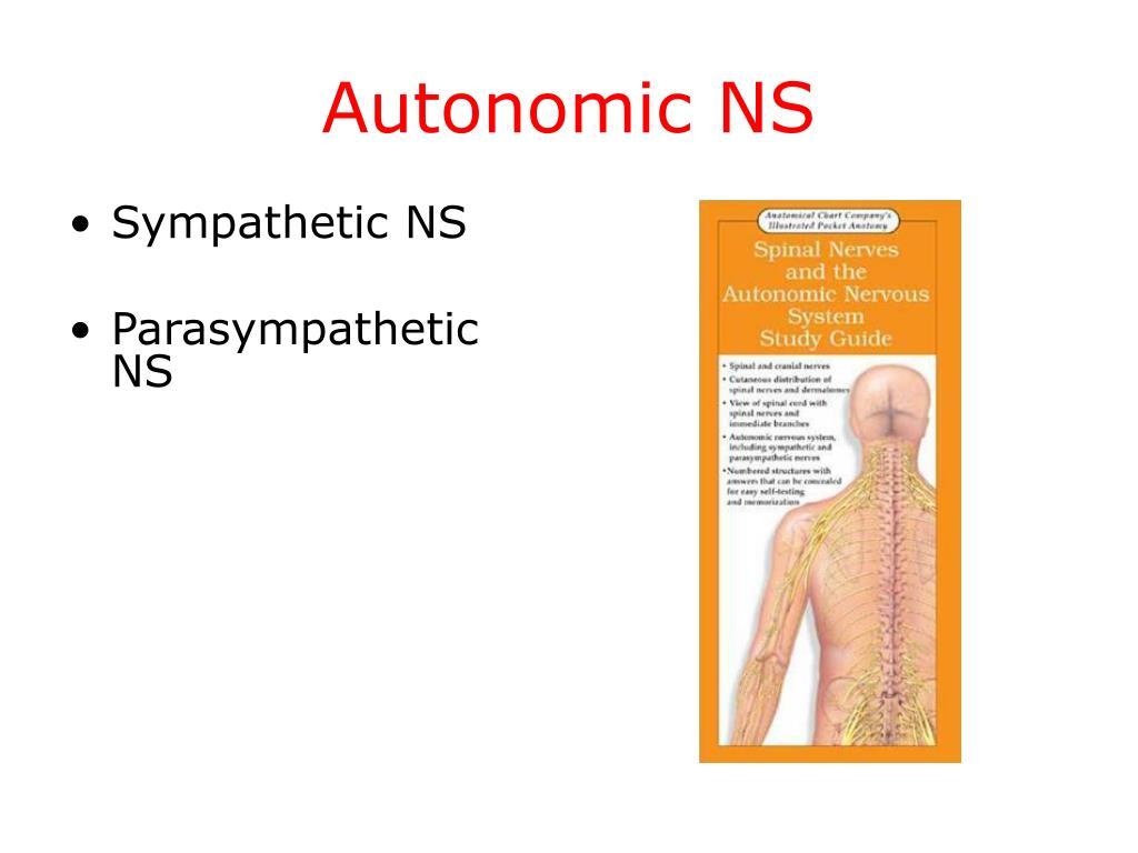 Autonomic NS
