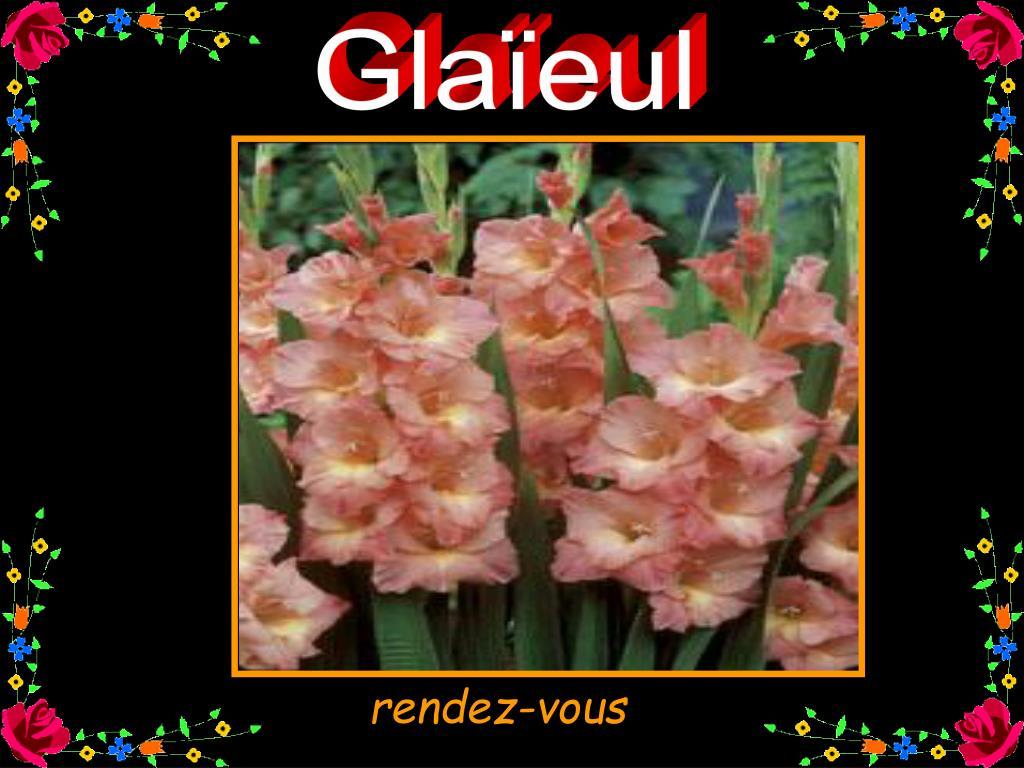 Glaïeul