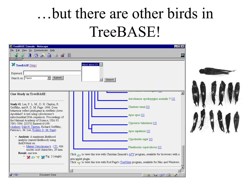 …but there are other birds in TreeBASE!