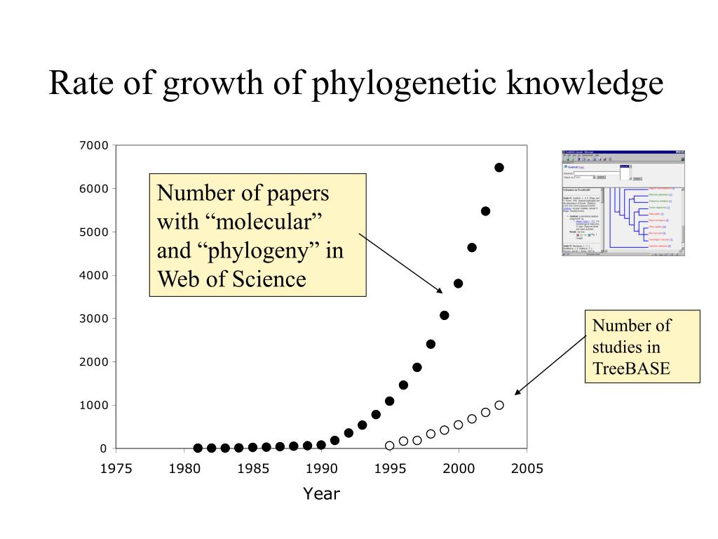 Rate of growth of phylogenetic knowledge