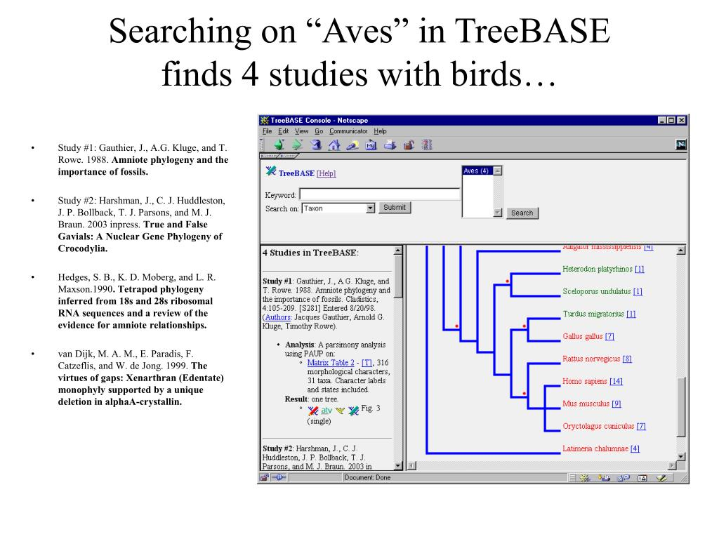 "Searching on ""Aves"" in TreeBASE"