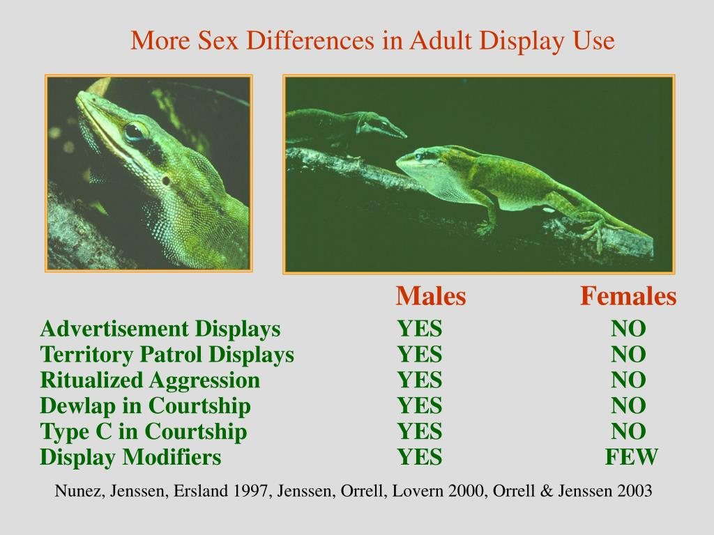 More Sex Differences in Adult Display Use