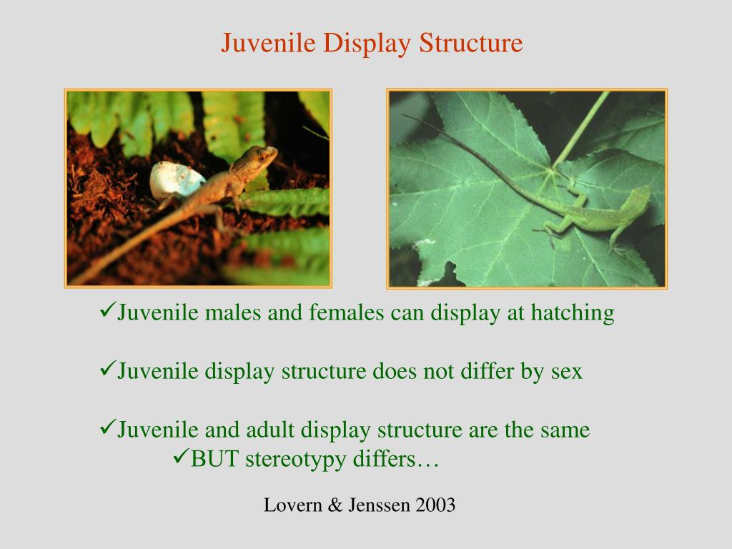 Juvenile Display Structure