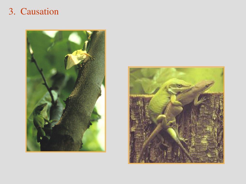 3.  Causation