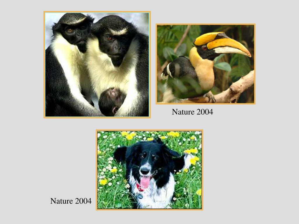 Nature 2004