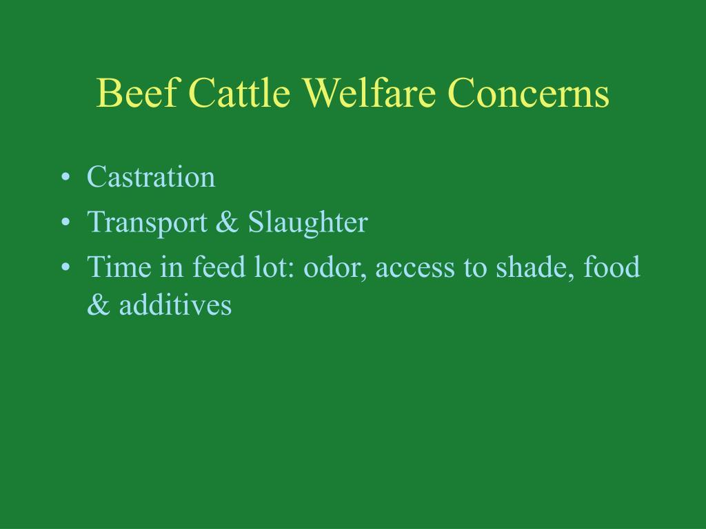 Beef Cattle Welfare Concerns