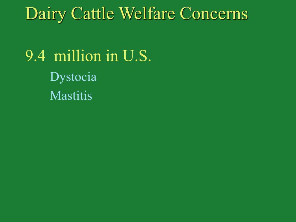 Dairy Cattle Welfare Concerns