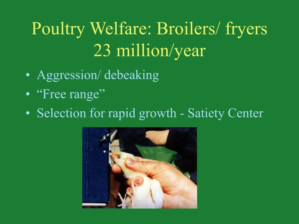 Poultry Welfare: Broilers/ fryers