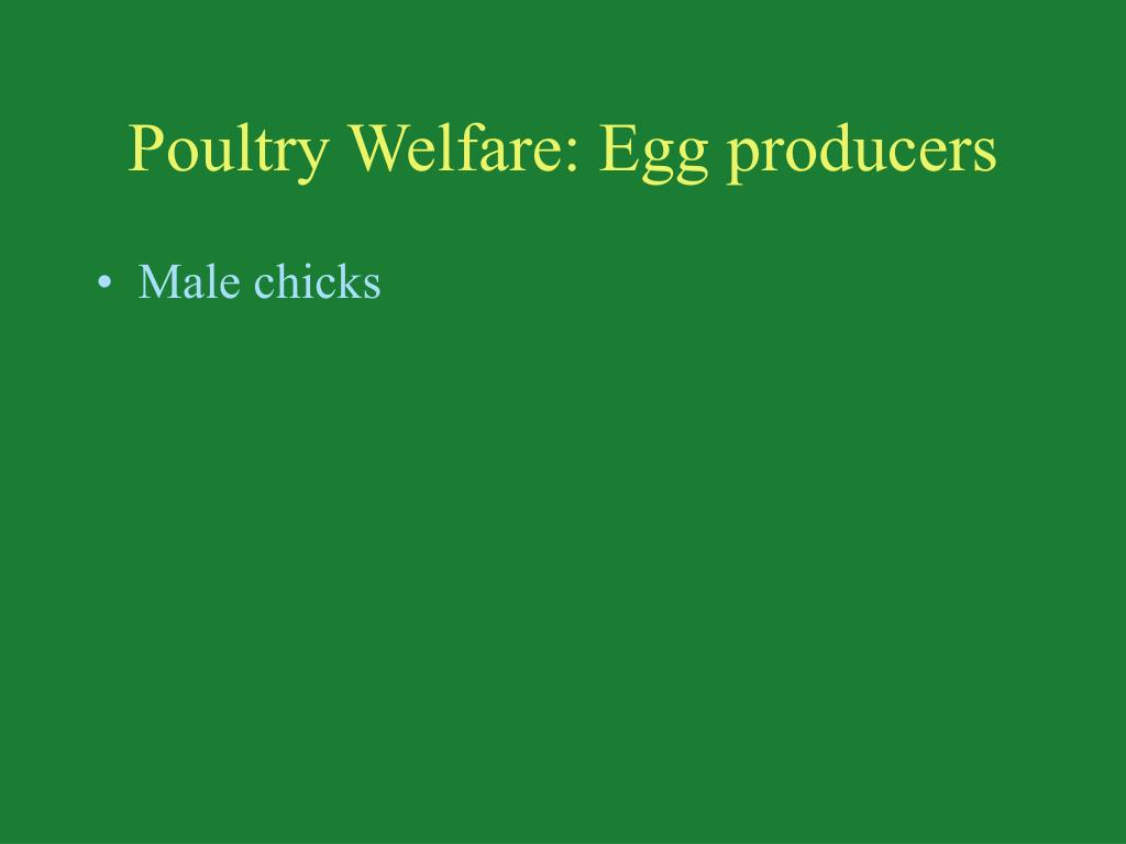 Poultry Welfare: Egg producers