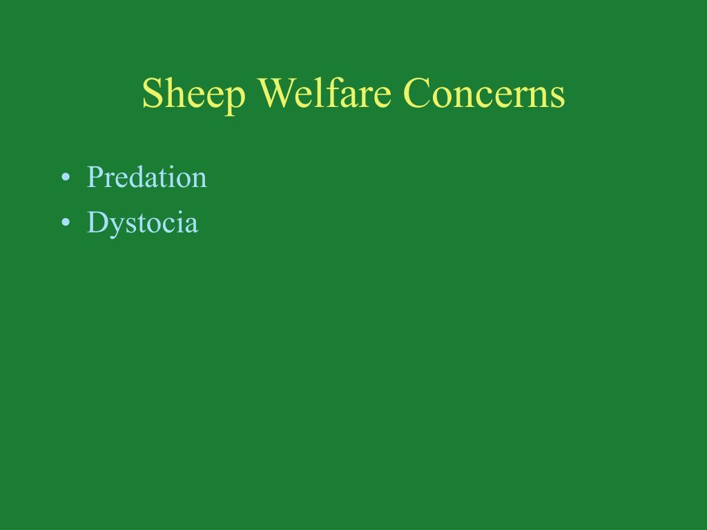 Sheep Welfare Concerns