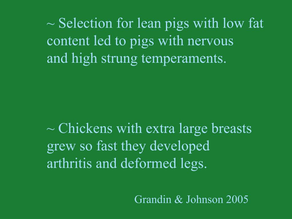 ~ Selection for lean pigs with low fat
