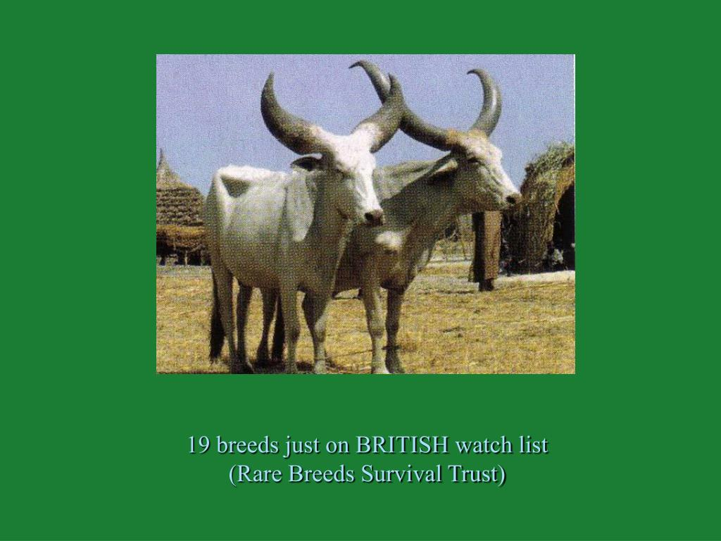 19 breeds just on BRITISH watch list