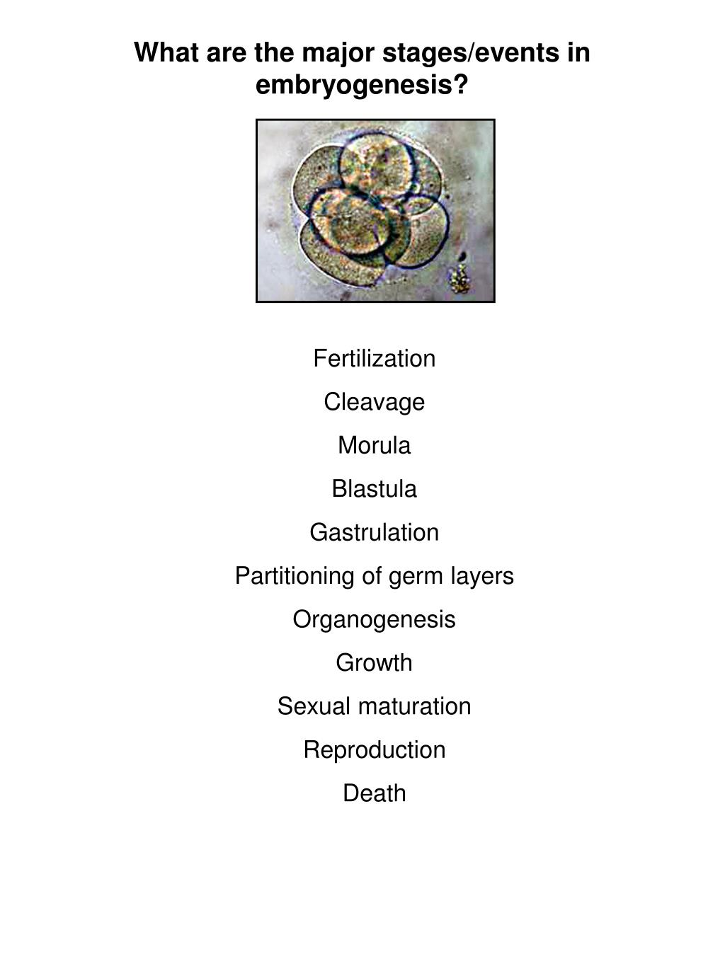 What are the major stages/events in embryogenesis?