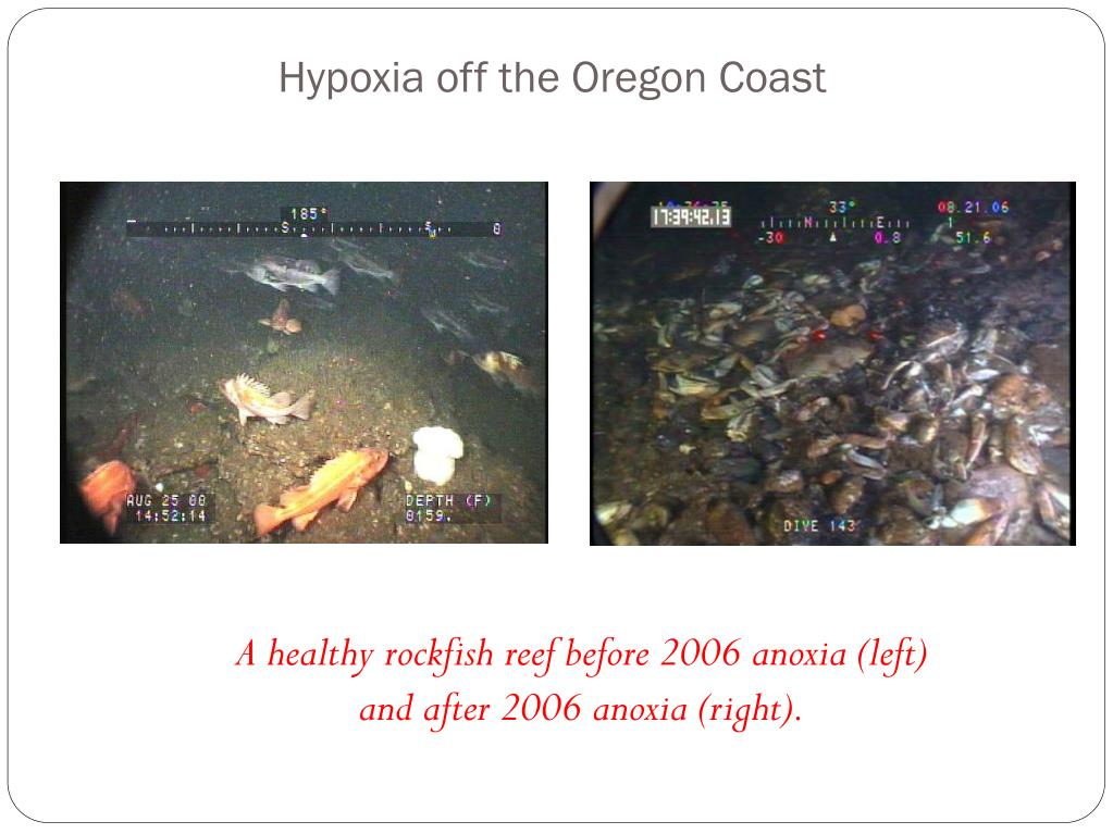 A healthy rockfish reef before 2006 anoxia (left) and after 2006 anoxia (right).