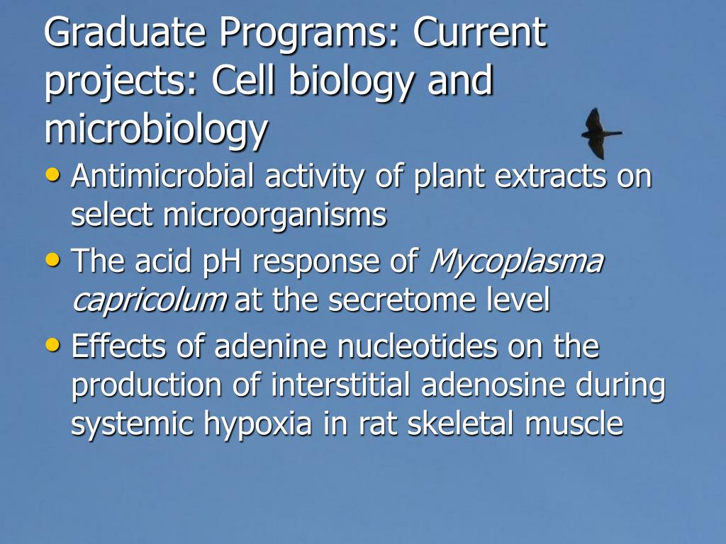 Graduate Programs: Current projects: Cell biology and microbiology