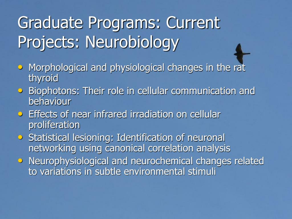 Graduate Programs: Current Projects: Neurobiology
