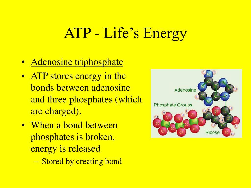 ATP - Life's Energy