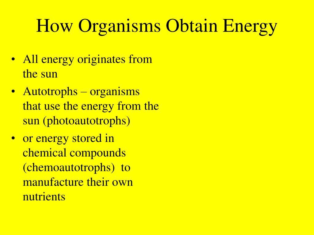 How Organisms Obtain Energy