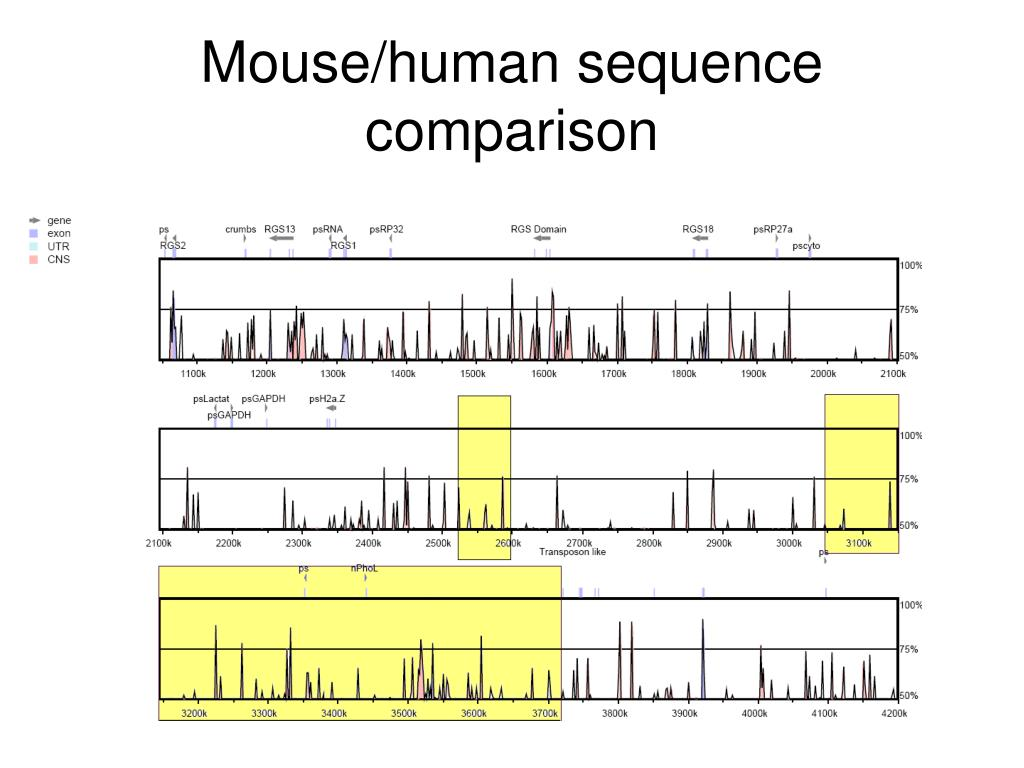 Mouse/human sequence comparison