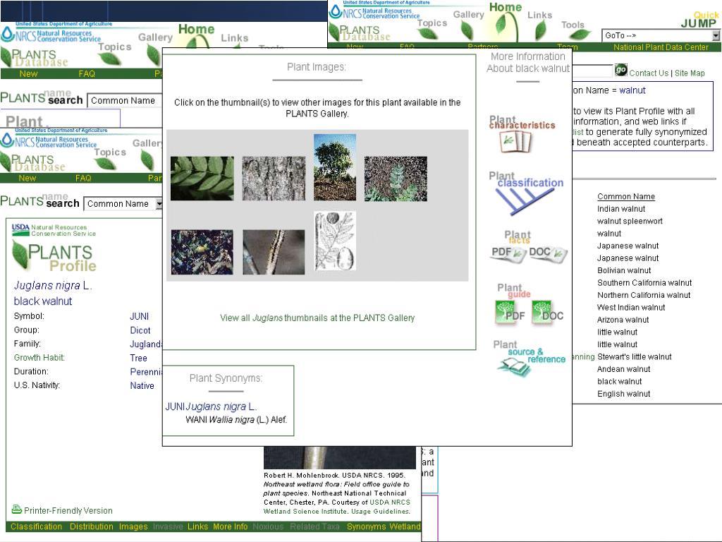 PLANTS National Database