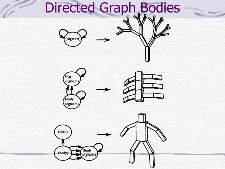 Directed graph bodies