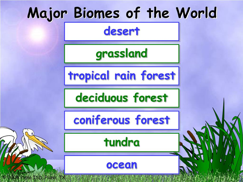 Major Biomes of the World