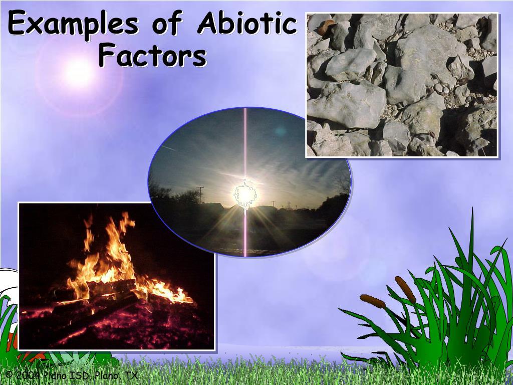 Examples of Abiotic Factors