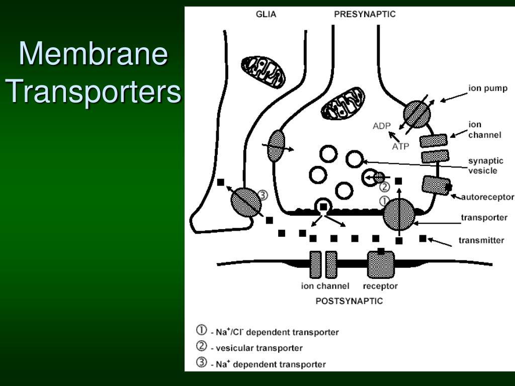 Membrane Transporters
