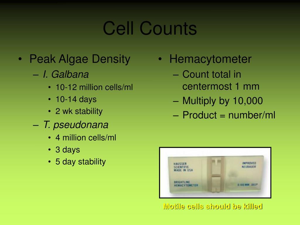 Peak Algae Density