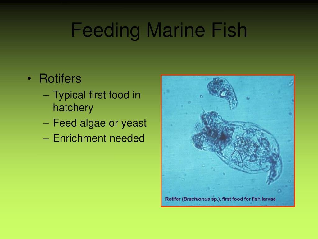 Feeding Marine Fish