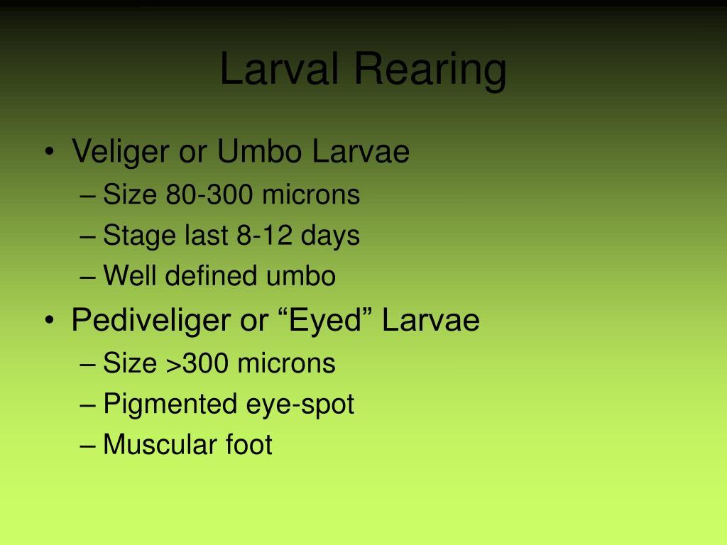 Larval Rearing