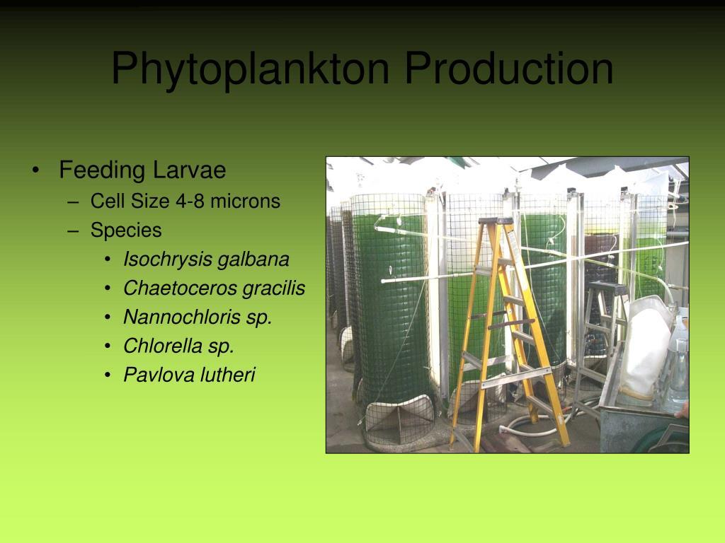 Phytoplankton Production