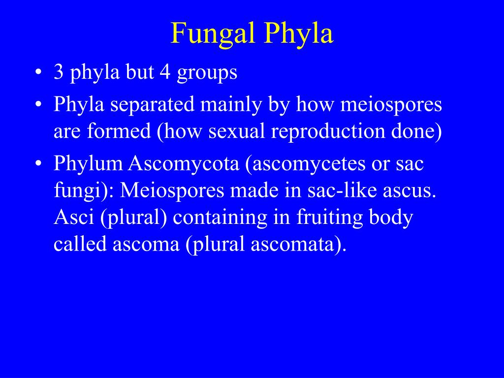 Fungal Phyla