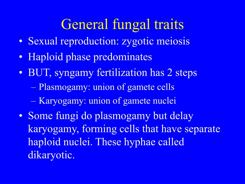 General fungal traits