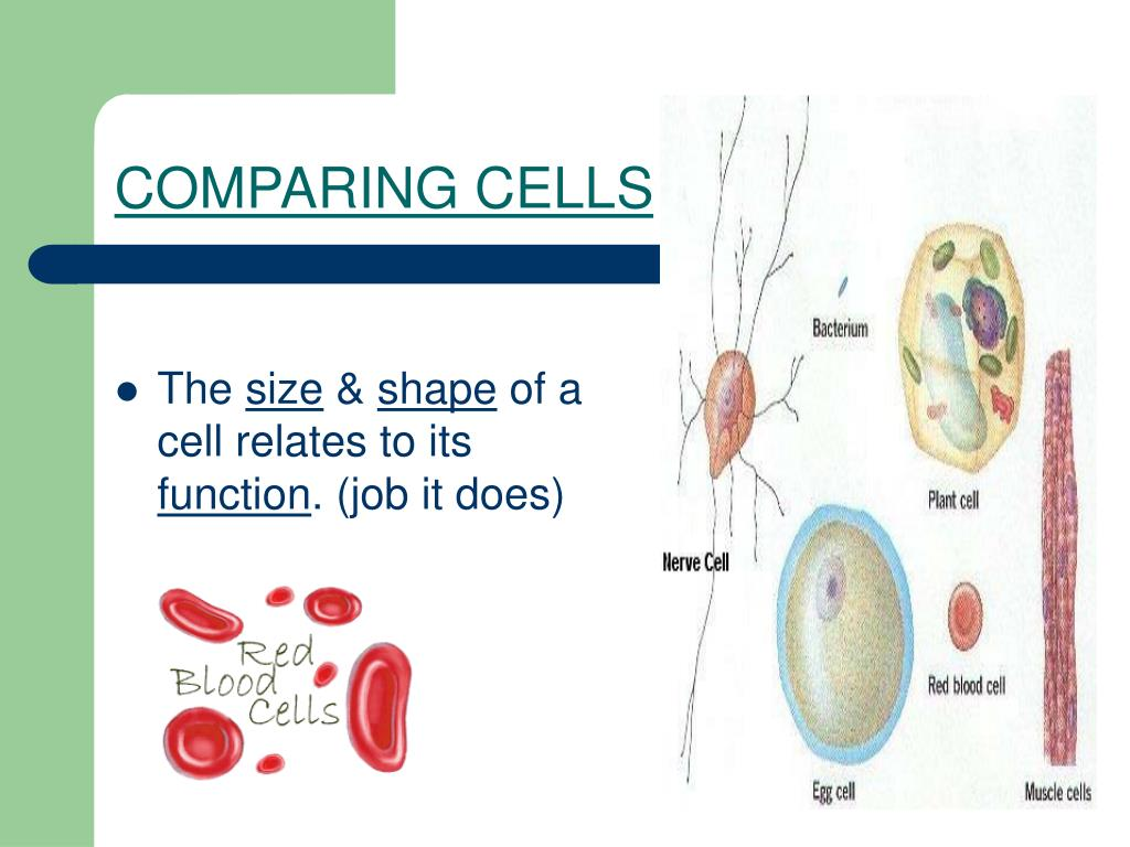 COMPARING CELLS