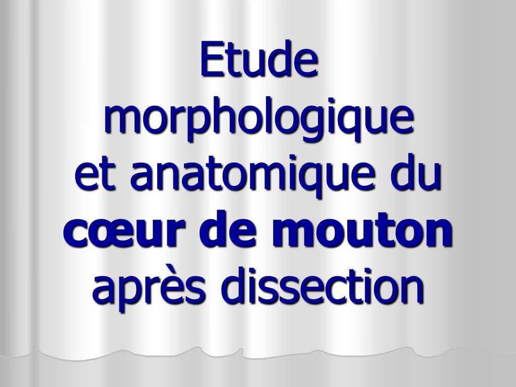 Etude morphologique