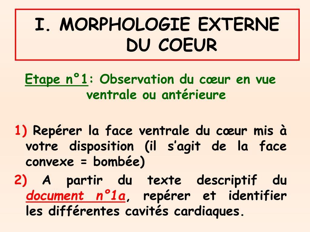 I. MORPHOLOGIE EXTERNE