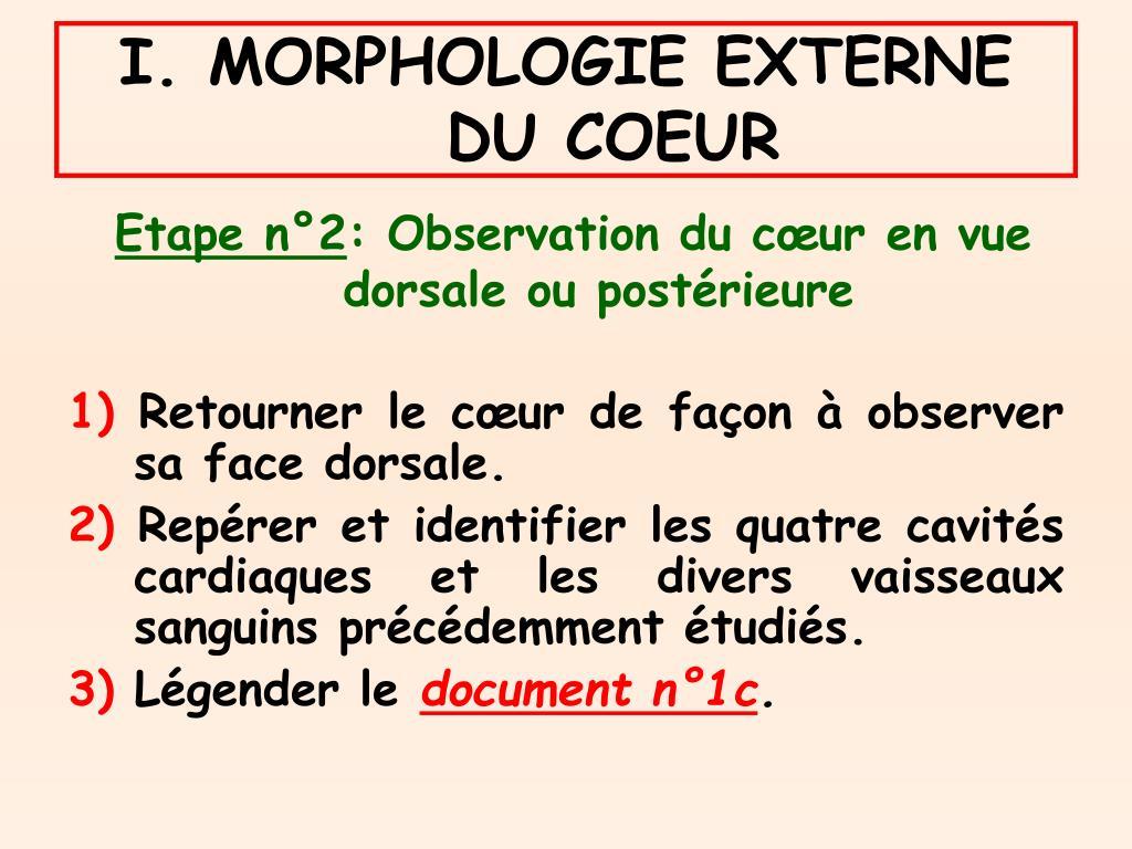 I. MORPHOLOGIE EXTERNE DU COEUR