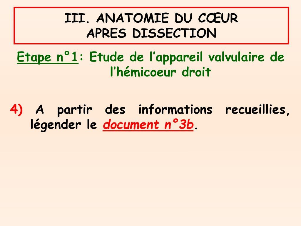 III. ANATOMIE DU CŒUR