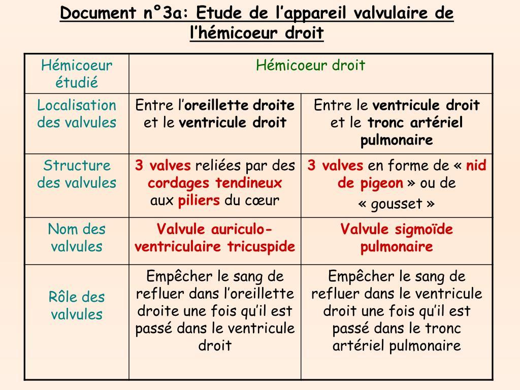 Document n°3a: Etude de l'appareil valvulaire de l'hémicoeur droit