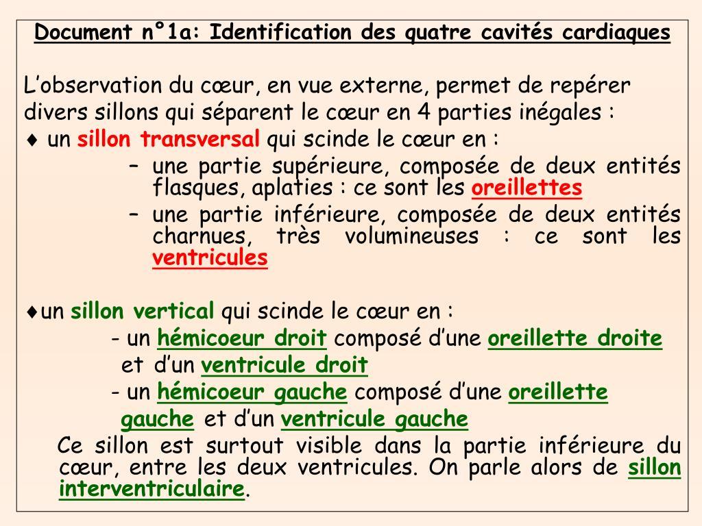 Document n°1a: Identification des quatre cavités cardiaques