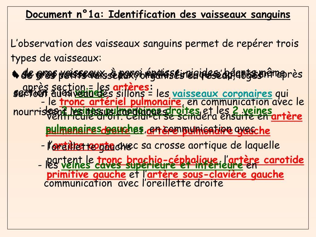 Document n°1a: Identification des vaisseaux sanguins