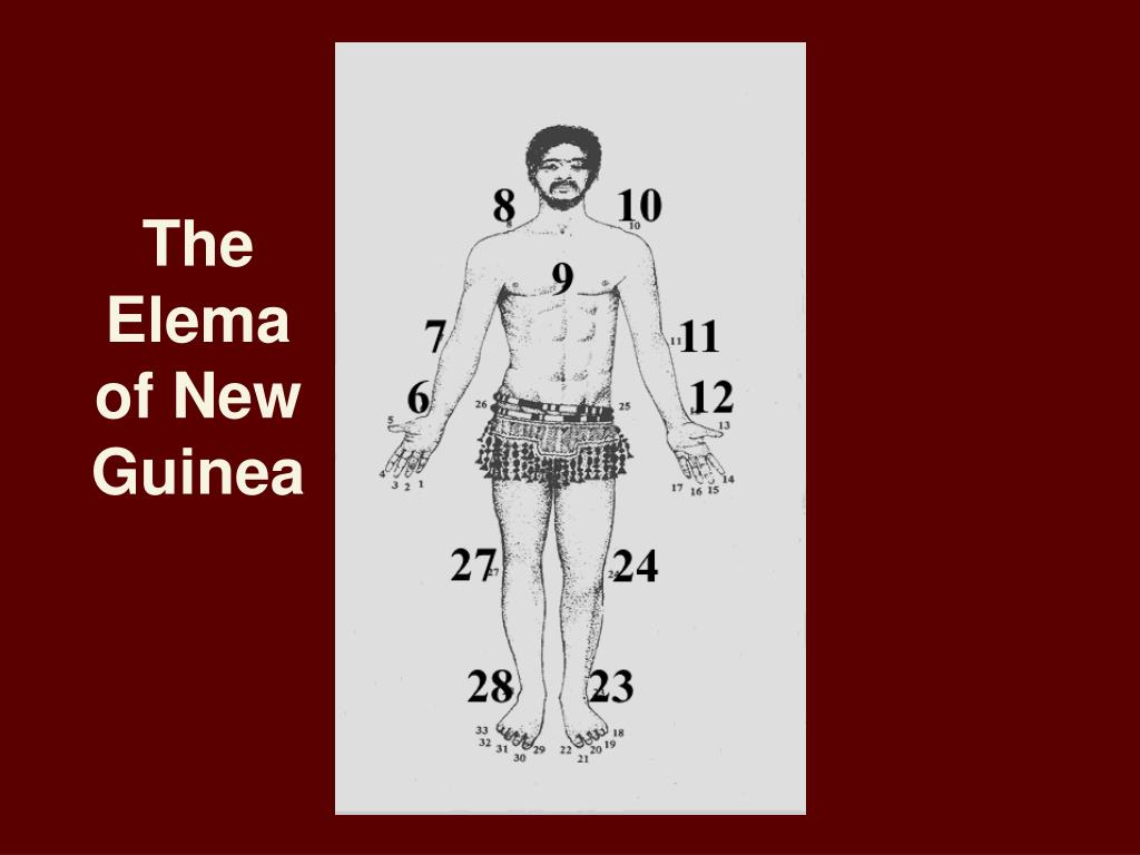 The Elema of New Guinea