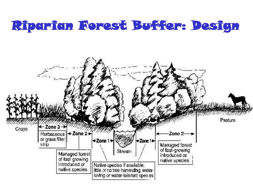 Riparian Forest Buffer: Design