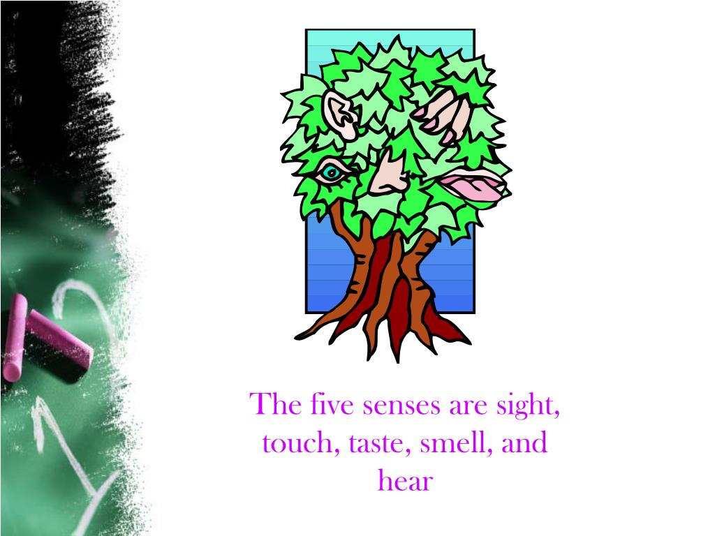 The five senses are sight, touch, taste, smell, and hear