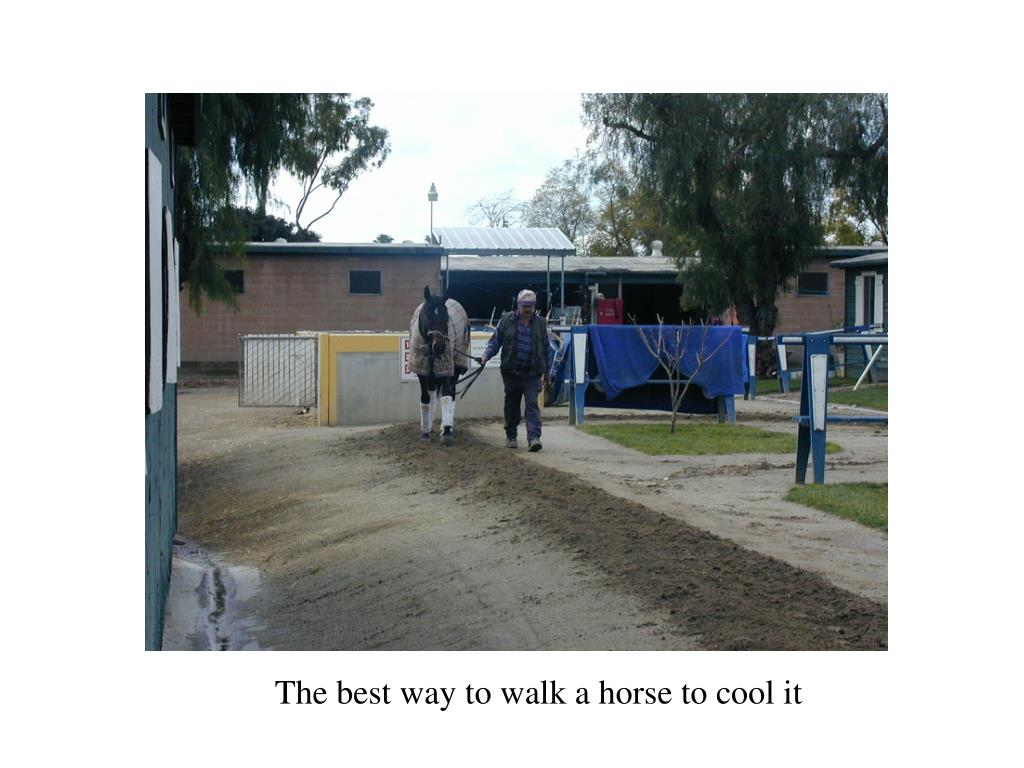 The best way to walk a horse to cool it