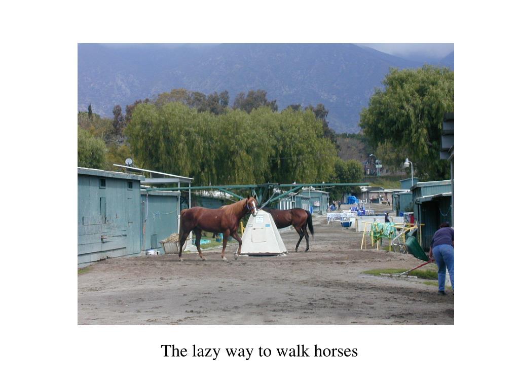 The lazy way to walk horses