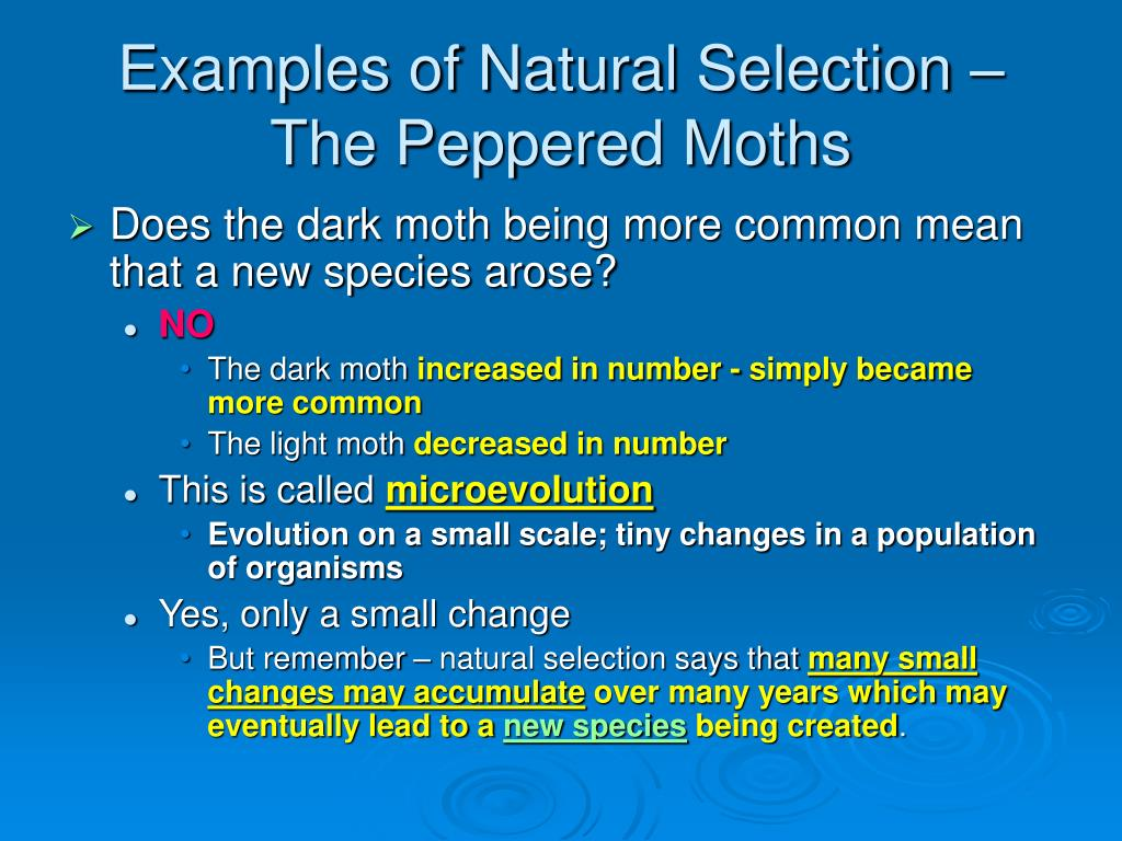 Natural Selection Variation Examples
