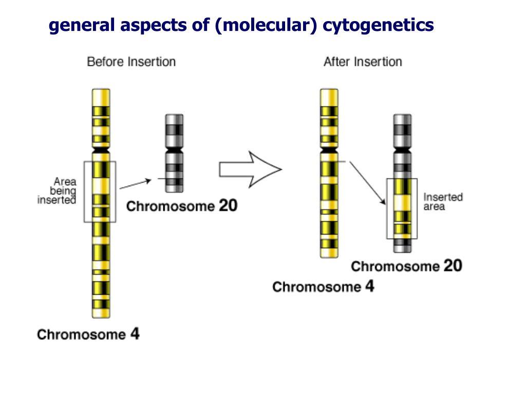 general aspects of (molecular) cytogenetics