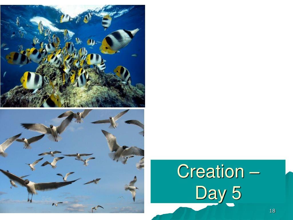 Creation –